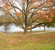 Northern Virginia Autumn  by Grace314