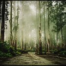 Dandenong Ranges by jamjarphotos