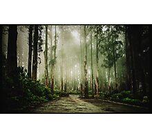 Dandenong Ranges Photographic Print