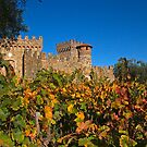 Fall at the Winery by Barbara  Brown
