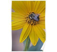Jerusalem Artichoke with Bee Poster