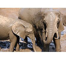 African elephants - mother and calf Photographic Print