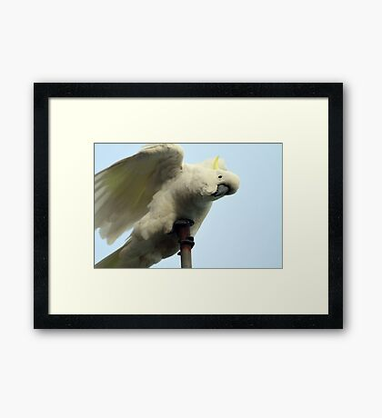 Acrobatics Framed Print