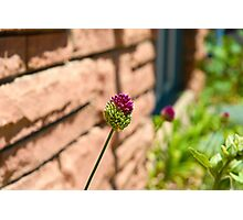 Bicolored Clover H Photographic Print