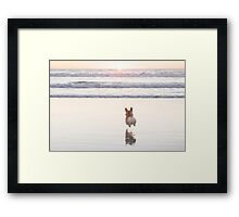 Beach Corgi Framed Print