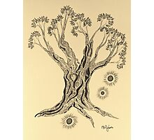 Shining in Serenity Tree in Sepia Photographic Print