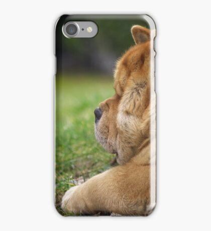 Chow-Chow dog portrait iPhone Case/Skin