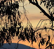 Peachy streaky dawn over Croydon through gum trees. by Neroli Wesley