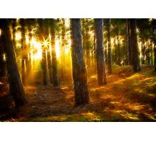 Fractal Landscape 1: Woodland Sunset Photographic Print