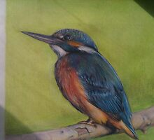 Kingfisher drawing by Keela
