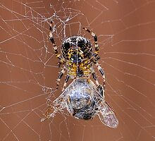 Spider and prey by Jason Clarke