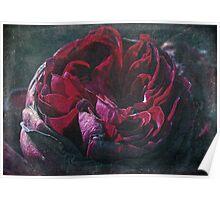 Vintage English Rose Poster