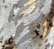 Gum tree bark 11 by Neroli Wesley