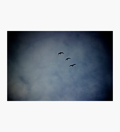 3 wise birds Photographic Print