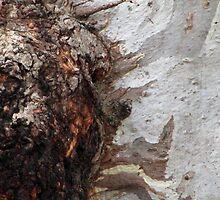 Gum tree bark 13: the burl up close by Neroli Wesley