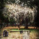 The Weeping Tree by Lea  Weikert