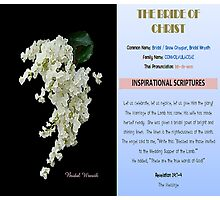 THE BRIDE OF CHRIST Photographic Print