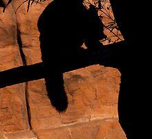 In the Shadows by S. Daniel McPhail