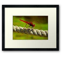 Red Dragonfly Framed Print