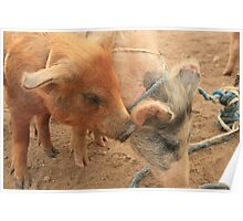 Pigs at the Market Poster