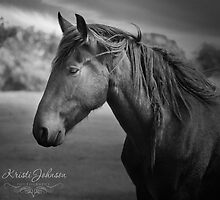 The beauty of a black stallion by kristijohnson