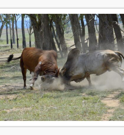 BULL FIGHT  IN THE OUTBACK Sticker