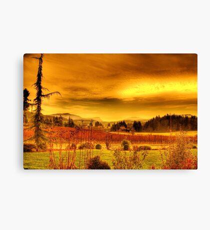 VIneyards, Maple Bay Canada Canvas Print