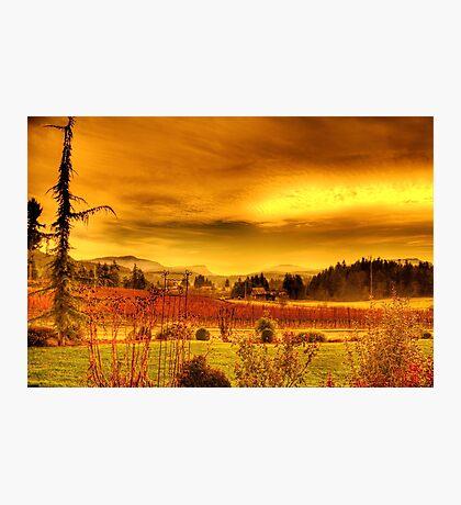 VIneyards, Maple Bay Canada Photographic Print