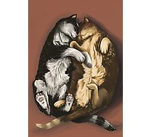 Snuggling Kittens  Photographic Print