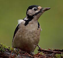 Great spotted woodpecker - II by Peter Wiggerman