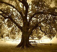 My Reading Tree  by hannahsview