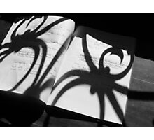 2014 Writings of the spider Photographic Print
