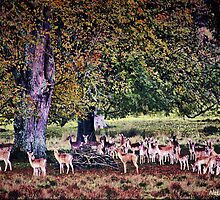 Kings Stag Park-Dorset by naturelover