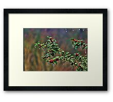 Freezing Holly Framed Print