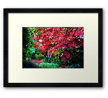 Magestic Autumn Framed Print