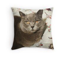 British Blue Kitten Throw Pillow