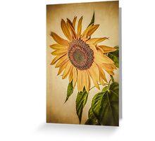 Vintage Sunflower Greeting Card