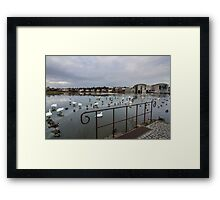 the pond community Framed Print