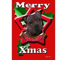 Staffordshire Bull Terrier says Merry Xmas Photographic Print