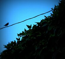 """Bird on a Wire"" Colorful Bird photo by JackieJeffries"