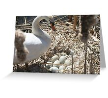 Mother Swan and Nest Greeting Card