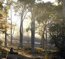sunbeams taken from our backyard early one foggy morning ,  by Christine Lovell