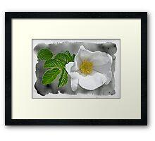 White Beach Rose Wildflower - Rosa rugosa Framed Print