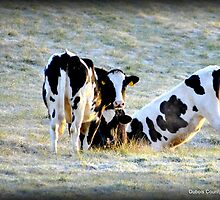 Sneaky Duff Cows by DCCaptured