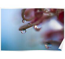 Grevillea Droplets Poster