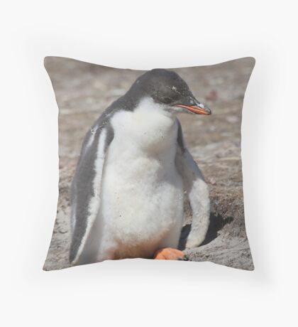 Baby Gentoo Penguin Waiting Throw Pillow