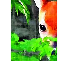 Fawn In Forest (zoom) Photographic Print