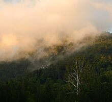 After the Storm - Tweed Valley by Barbara Burkhardt