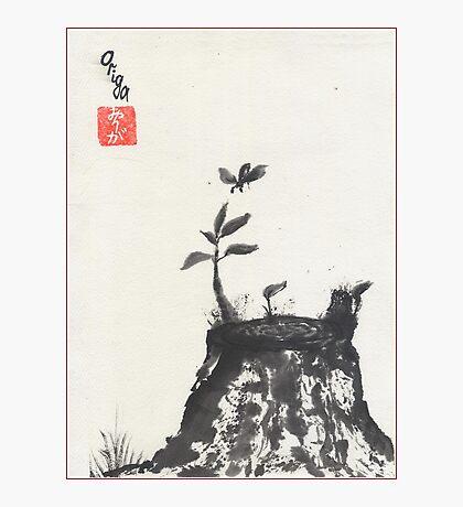 Old Stump Photographic Print
