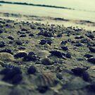 the shore by schizomania